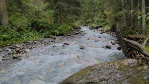 wilder Bach durch Wald